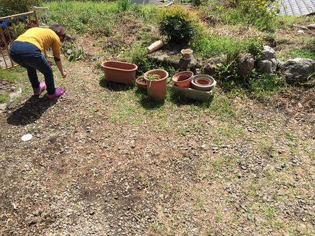 庭で地道に作業