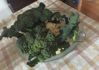 ブロッコリーとカリフラワー収穫