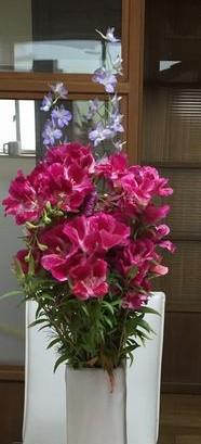 田舎では花キレイ (2)