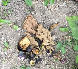 茄子猿被害