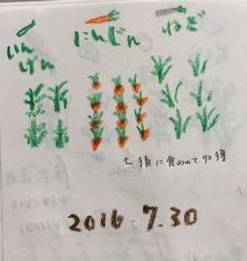 家の前の畑 (2)