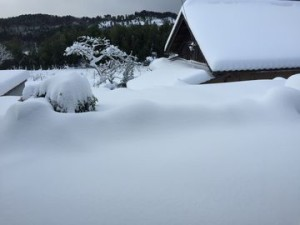 一面雪景色 (3)