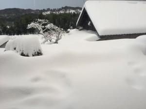 0116大雪 (2)