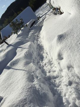 0117大雪 (11)