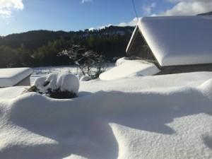 0117大雪 (13)