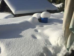 0117大雪 (14)