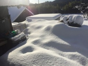 0117大雪 (15)