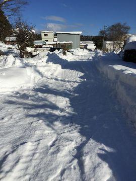 0117大雪 (9)
