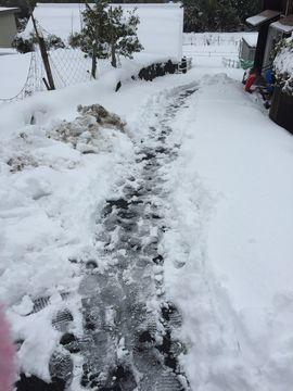 20170123雪再び (1)