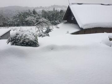 20170123雪再び (2)