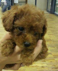 小さいころの愛犬