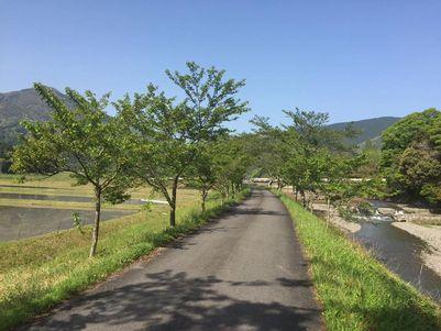 田舎の田んぼ道 (2)
